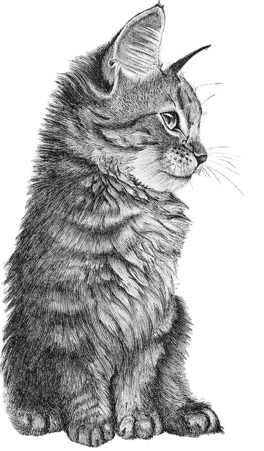 http://catclubvictoriagdansk.pl/wp-content/uploads/2020/06/kontakt-removebg-preview.png