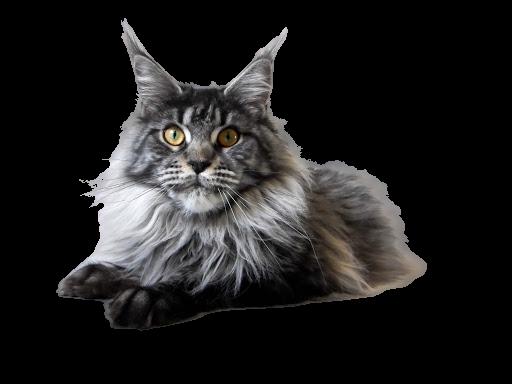 https://catclubvictoriagdansk.pl/wp-content/uploads/2021/02/MC-removebg-preview.png